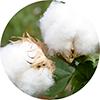 tajido algodón